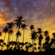 Coconut tree with the silhouette at sky - PhotoDune Item for Sale