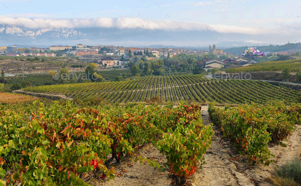 ountryside town of elciego and autumn vineyards in la rioja, Spain - Stock Photo - Images