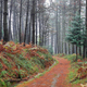 Foggy forest in autumn foliage, Basque Country - PhotoDune Item for Sale