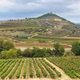 Vineyards and Davalillo castle, La Rioja (Spain) - PhotoDune Item for Sale