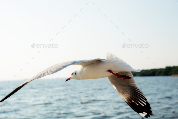Seagull flying at sea - Stock Photo - Images