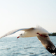 Seagull flying at sea - PhotoDune Item for Sale