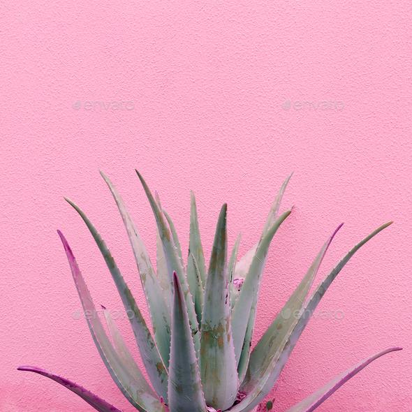 Plants on pink fashion idea. Aloe on pink wall background.  Mini - Stock Photo - Images