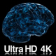 4K Digital Technology of a Human Brain Concept - VideoHive Item for Sale