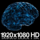Digital Technology of a Human Brain Concept - VideoHive Item for Sale