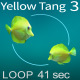 Yellow Tang 3 - VideoHive Item for Sale