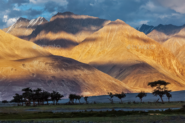 HImalayas on sunset with tree silhouettes - Stock Photo - Images