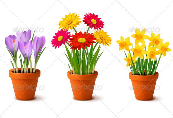 Spring And Summer Colorful Flowers In Vases Plants Nature