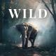 WILD - Photographer & Videographer Portfolio Muse Template