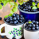 Fresh ripe bluberries (bilberries) in enamel mugs - PhotoDune Item for Sale