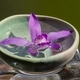 Pink orchid on glass cube - PhotoDune Item for Sale