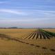Barren field with tree shadow - PhotoDune Item for Sale