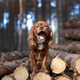 Dog with opened mouth sitting on the pile of wood - PhotoDune Item for Sale