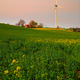 Cabin on the rape seed field and wind turbine - PhotoDune Item for Sale
