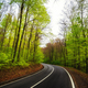 Asphalt road curve in the green forest - PhotoDune Item for Sale