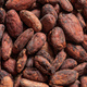 Cocoa beans full frame background, banner. Close up view - PhotoDune Item for Sale