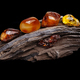 Natural amber. Several pieces of different colors of natural amber on large piece of stoned wood - PhotoDune Item for Sale