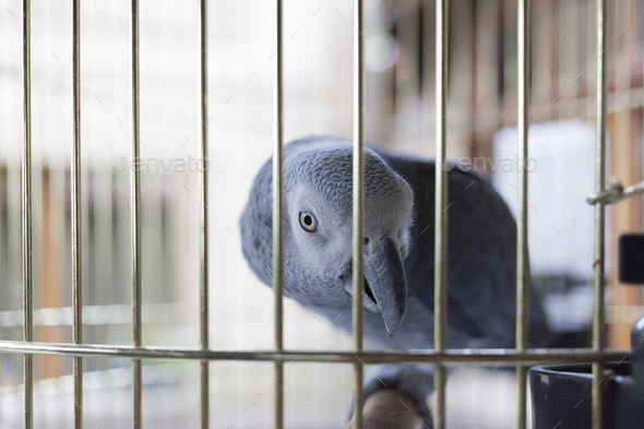 Parrot in a cage. - Stock Photo - Images