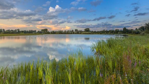 Lush River bank vegetation in forelands Blauwe Kamer - Stock Photo - Images