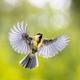 Bird in flight on green garden background instagram format - PhotoDune Item for Sale