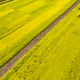 aerial view of rapeseed flower blooming - PhotoDune Item for Sale