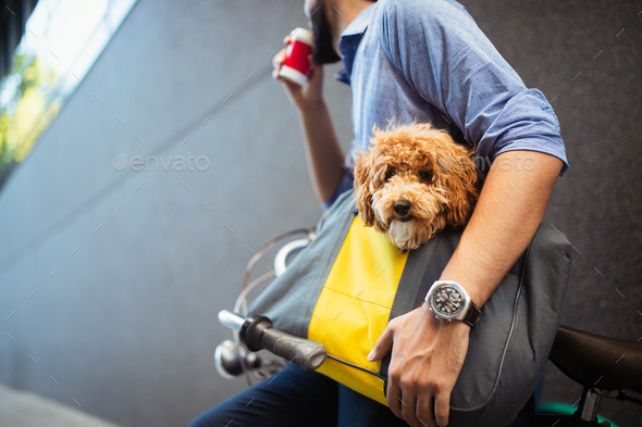 Handsome business man on street drinking coffee with dog - Stock Photo - Images
