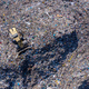Aerial view of large landfill. Waste garbage dump, environmental pollution - PhotoDune Item for Sale