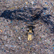 Aerial drone view of bulldozer working on landfill, trash dump - PhotoDune Item for Sale