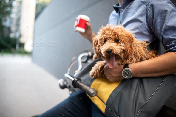 Handsome smiling man sitting on a bicycle on the street and drinking coffee - Stock Photo - Images