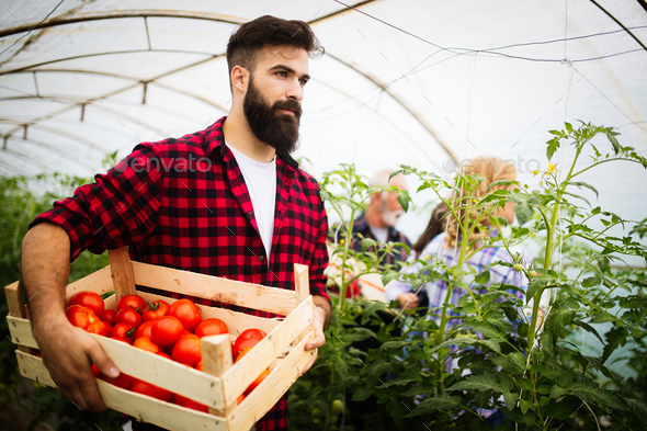 Farmer family picking organic vegetables in garden - Stock Photo - Images