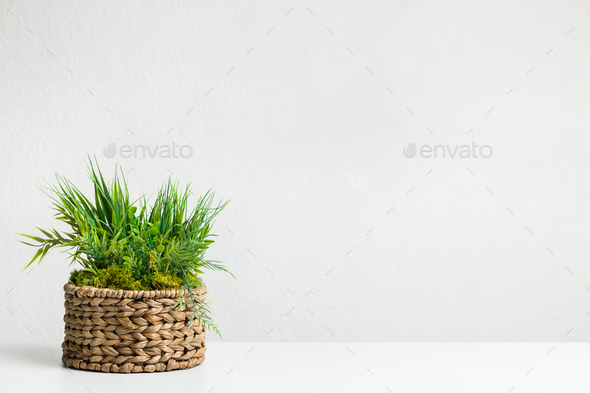 Grassy plant in diy wicker flowerpot over grey wall - Stock Photo - Images