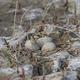 eggs in the nest in natural habitat - PhotoDune Item for Sale