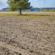 Pine tree in a plowed field - PhotoDune Item for Sale