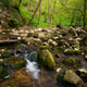 Flowing stream in the beautiful green forest - PhotoDune Item for Sale