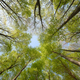 Beautiful forest scene, bottom view of tall trees - PhotoDune Item for Sale