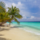 Bending palm tree on tropical beach - vacation background - PhotoDune Item for Sale