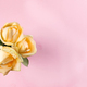 Beautiful beige roses isolated on pink background, flat lay copy space - PhotoDune Item for Sale