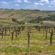 Vineyards of Oltrepo Pavese in April - PhotoDune Item for Sale