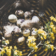 Easter holiday greeting card with quail eggs, top view - PhotoDune Item for Sale