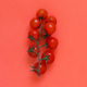 Cherry tomatoes on a coral red background - PhotoDune Item for Sale