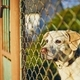 Dog waiting behind fence - PhotoDune Item for Sale
