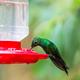 Kolibri - PhotoDune Item for Sale
