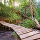 Boardwalk in the forest - PhotoDune Item for Sale