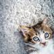 Adorable little cat - PhotoDune Item for Sale