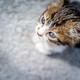 Cute little kitty - PhotoDune Item for Sale