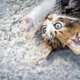 Nice kitty having fun outdoors - PhotoDune Item for Sale