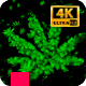 Marijuana Stoned Loop 4K - VideoHive Item for Sale