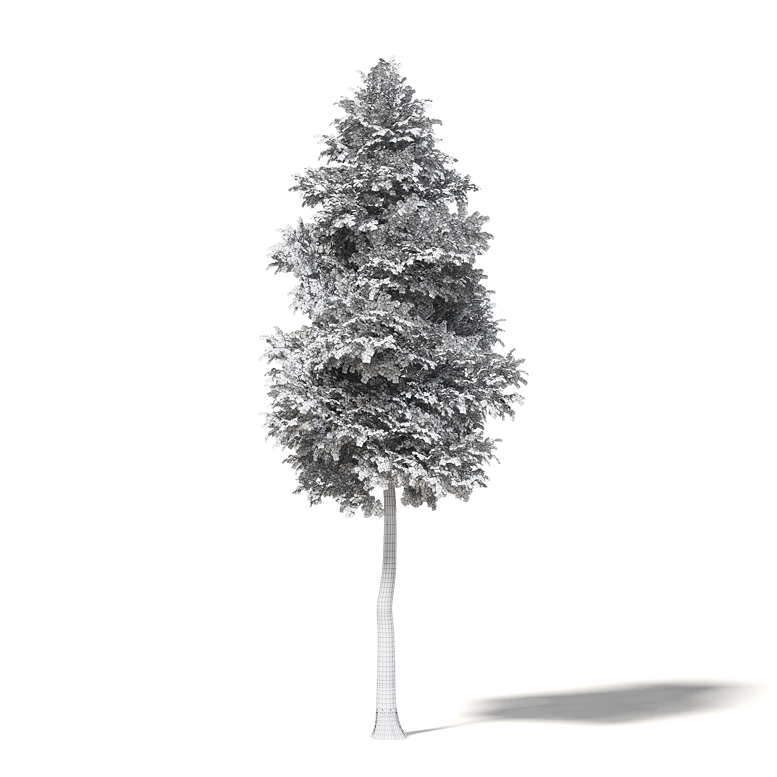 Alder 3D Model 9.5m
