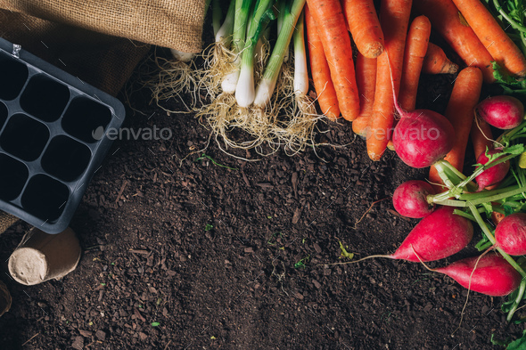Organic homegrown produce and gardening equipment with copy spac - Stock Photo - Images