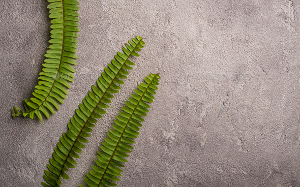 Background with green fern leaves. - Stock Photo - Images